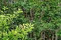 Plant 94 (32185815965).jpg