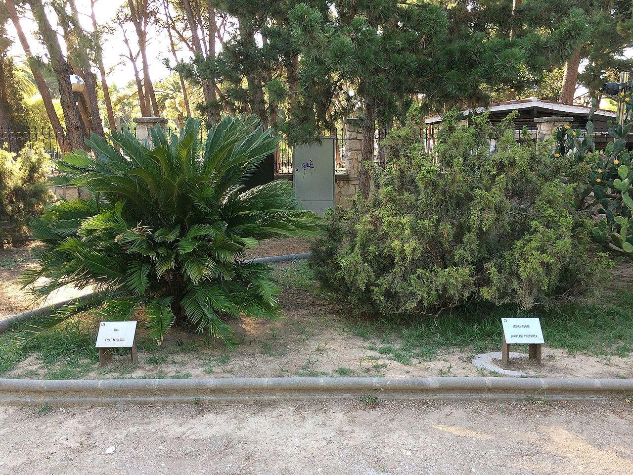 Archivo plantas en el jard n bot nico del parque grande for Informacion sobre el jardin botanico