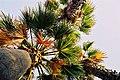 Plants-Sicily-bjs-1.jpg