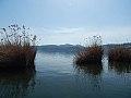 Plants in kastoria lake.jpg