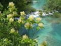 Plitvice lakes (12).JPG