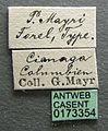 Pogonomyrmex mayri casent0173354 label 1.jpg