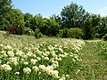Poltava Botanical garden (177).jpg