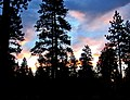 Ponderosa Sunrise, Sisters, OR 9-13 (15474554290).jpg