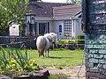 Pony at Heath Hill - geograph.org.uk - 416371.jpg