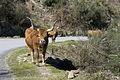 Portugal-Parque do Gerês-P1240550 (25867579876).jpg