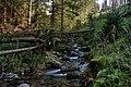 Potok w Dolinie Bystrej - Tatrzański Park Narodowy wpólrzędne 49°16'07.2N 19°58'53.1E (Ten plik został przesłany w ramach konkursu Wakacje z Wikipedią).jpg