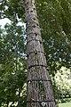 Prades - colo arbre.jpg