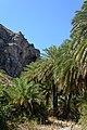 Preveli Palm Forest 07.JPG