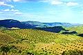 Primavera no vale do Côa -2.jpg