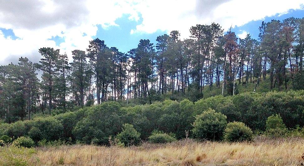 Prospect Pine Forest, Sydney