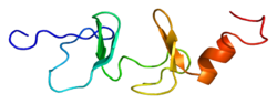 Protein FHL2 PDB 1x4k.png
