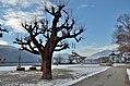 Przyborski-Promenade 02, Millstatt.jpg