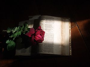 1581 Psalter with Rose Warm sunlight streams d...