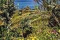 Punta Falcone 002.jpg