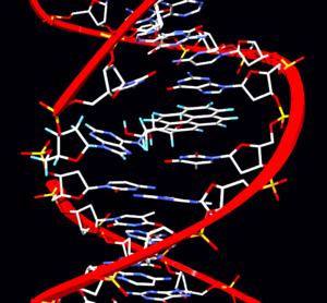 Британские ученые выяснили, что, подобно тому как различные типы опухолей несут в себе разные генетические мутации...