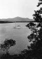 Queensland State Archives 1371 A scene in the Hinchinbrook Channel c 1935.png