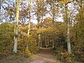 Queenswood Country Park - geograph.org.uk - 621535.jpg