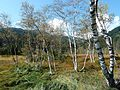 Ramsar Site Mires of Pass Thurn 10.jpg