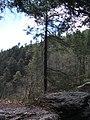 Raymondskill Falls - Pennsylvania (5677468865).jpg