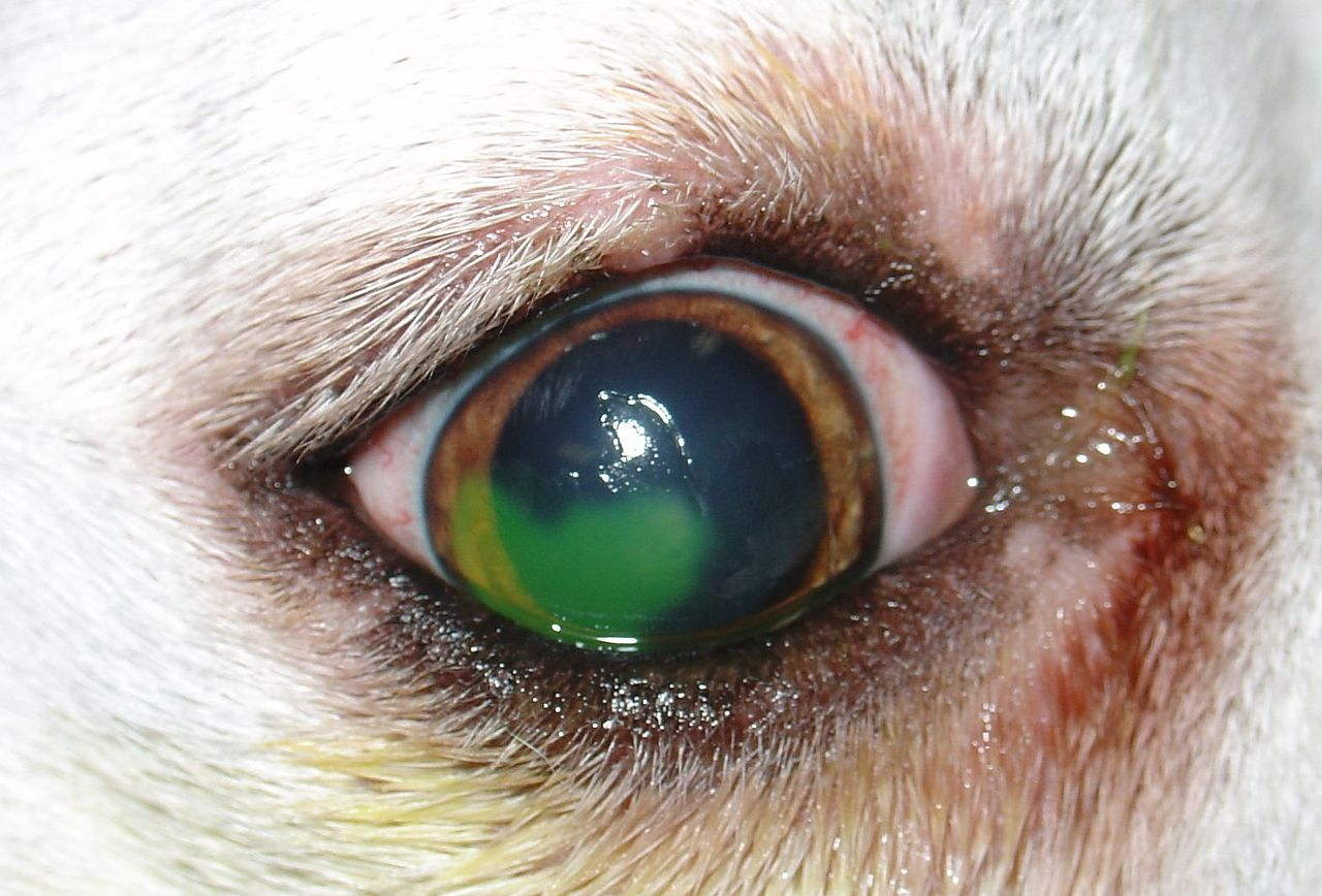 Blisters In Dogs Eyes