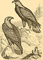 Reptiles and birds - a popular account of the various orders; with a description of the habits and economy of the most interesting (1869) (14562422647).jpg