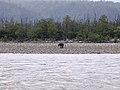 Reserved forest with elephant in Rishikesh, Uttarakhand, India 01.jpg