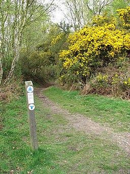 Restricted byway in Kelling Heath - geograph.org.uk - 1253131