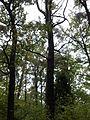 Rezerwat przyrody Dęby w Meszczach 12.09.jpg