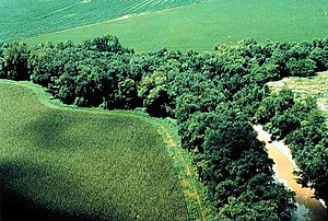 Riparian zone - A well-preserved riparian strip on a tributary to Lake Erie