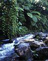Riparian vegetation along the Río Jilamito - ZooKeys-298-077-g004A.jpg