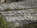 Rippelmarken des Unteren Muschelkalks im Göttinger Wald 2.jpg