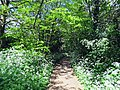 River Ching footpath 03, South Chingford, Waltham Forest, London, England.jpg