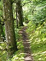 River Garry path - geograph.org.uk - 1469900.jpg