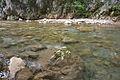 River Mali Rzav and Visocka Banja Spa in Serbia - 4283.NEF 08.jpg