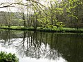 River Tavy, Reflections of the Trees - geograph.org.uk - 403016.jpg