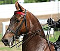 Rock Creek Spring Horse Show 2008 (2673757993).jpg