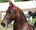Rock Creek Spring Horse Show 2008 (2673757993).jpg