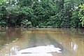 Roman Forest Flood, 4-19-16 at 2-30 PM (26256279390).jpg