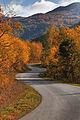 Rruga per fshat.jpg