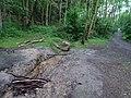 Ruzyně, cesta v údolí Zlodějky.jpg
