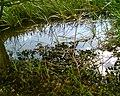 Rzeka Marycha - panoramio.jpg