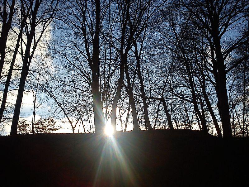 File:Słońce wśród buków - panoramio.jpg