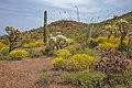 Saguaro Nat. Park (16172327202).jpg