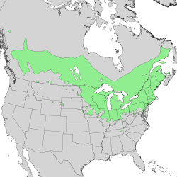 Salix discolor range map 2.png