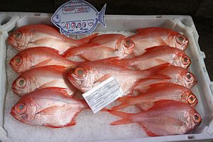 Alfonsino - Alfonsinos for sale