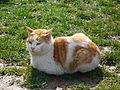 Sarı kedi.JPG