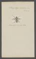 Sarcophaga - Print - Iconographia Zoologica - Special Collections University of Amsterdam - UBAINV0274 039 06 0039.tif