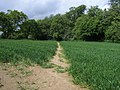 Saunder's Wood - geograph.org.uk - 1306185.jpg