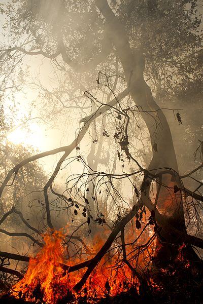 File:SaurabhSawant ForestFire SGNPMumbai MG 0962.jpg